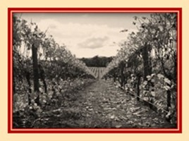 Fall_into_Pinot_Picture