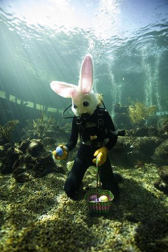 Miami Seaquarium BunnyPalooza