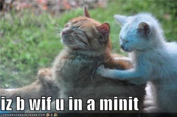 massage cats